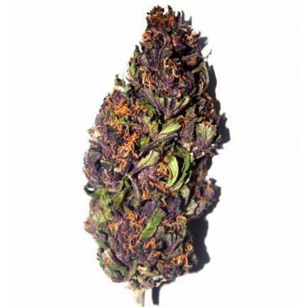 Purple Haze CBD
